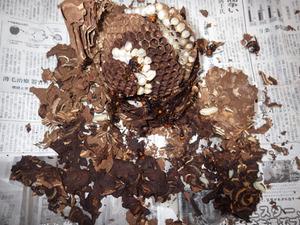 泉崎村で駆除したスズメバチの巣.jpg