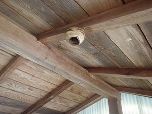 物置の天井に作ったコガタスズメバチの巣(三春町、2014年5月31日).jpg