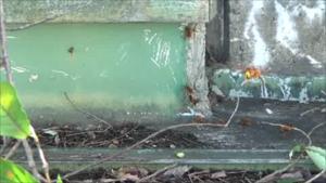 猪苗代町で樹脂穴からスズメバチが出入り.png