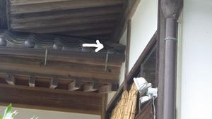 玉川村でスズメバチが出入りする隙間.jpg