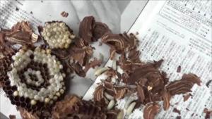 玉川村で駆除したスズメバチの巣.png