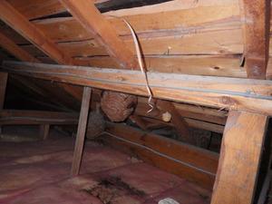 田村市で屋根裏のスズメバチの巣.jpg