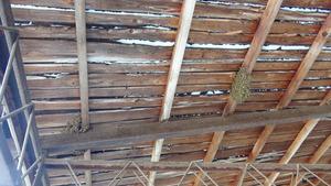 白河市でミツバチ駆除の現場.jpg