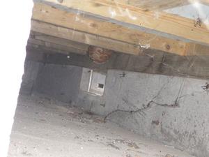 白河市で床下のスズメバチの巣.jpg