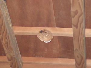 白河市で玄関天井のスズメバチの巣.jpg
