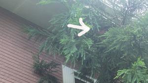 白河市で空き家のスズメバチの巣.jpg