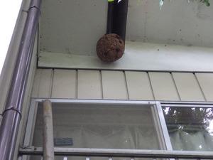 白河市で軒下のスズメバチの巣を駆除.jpg