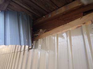 矢吹町で壁内のスズメバチの巣の位置.jpg