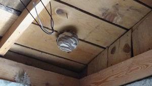 矢吹町で物置天井のスズメバチの巣.jpg