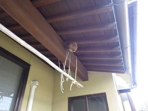矢吹町で軒下のスズメバチの巣.jpg