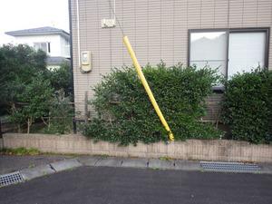 福島市でスズメバチ駆除の現場.jpg