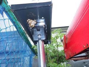 福島市でハチ駆除.jpg