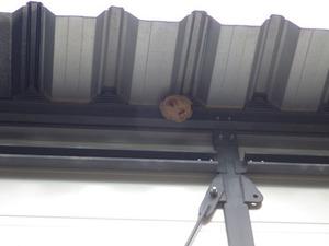 福島市で軒下のスズメバチの巣-引っ越し巣.jpg