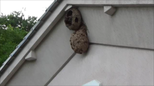 福島市で軒下のスズメバチの巣.png