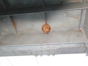 福島市営アパートの非常階段にあったスズメバチの巣(福島市、2012年8月27日).jpg