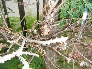 草むしり中にアシナガバチに刺された現場 二本松市、7月下旬