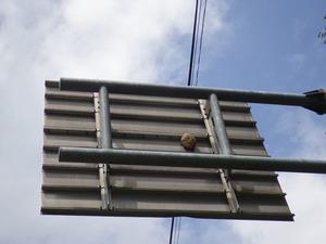 道路標識の裏にあったキイロスズメバチの巣(福島県三春町).jpg