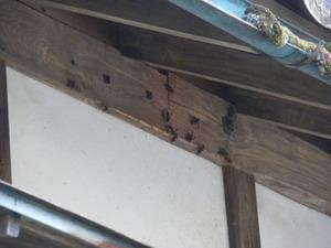 郡山市でオオスズメバチがスズメバチを襲う.jpg