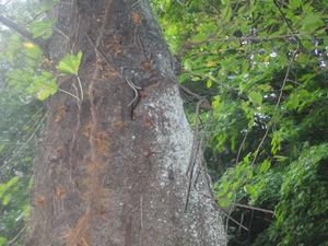 郡山市でスズメバチの巣がある樹洞.jpg