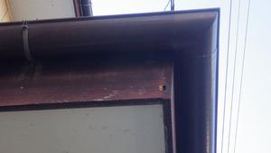 郡山市でスズメバチ駆除の現場.jpg