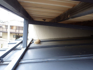郡山市でベランダ床下の巣跡と屋根に放置されたスズメバチの巣.jpg