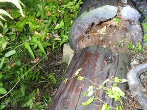 郡山市で丸太の中にスズメバチの母巣.jpg