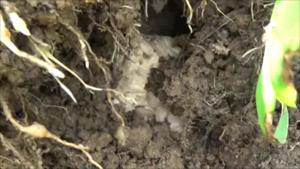 郡山市で土の中にスズメバチの巣.png
