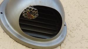 郡山市で換気口フードにアシナガバチの巣.jpg