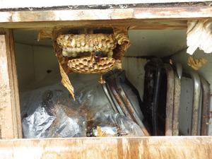 郡山市で木箱の中のスズメバチの巣.jpg