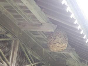 郡山市で母屋の軒市のスズメバチの巣.jpg