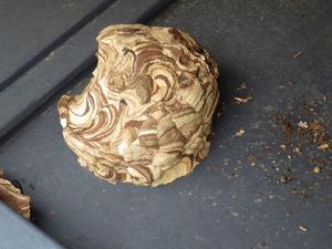 郡山市で落下して屋根に放置されたスズメバチの巣.jpg