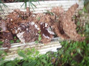郡山市で農機具庫で駆除したスズメバチの巣.jpg