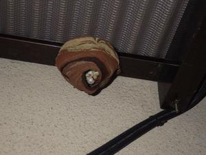 郡山市のテラス天井に作られたスズメバチの巣.jpg