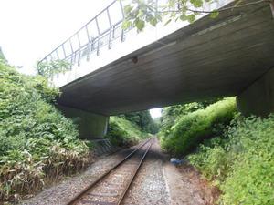 鉄道線路をまたぐ道路にキイロスズメバチの巣(柳津町、2012年8月7日).jpg