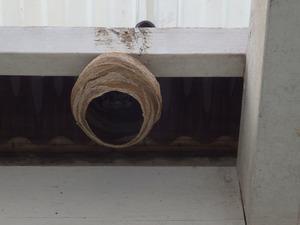鏡石町でテラスのスズメバチの巣.jpg
