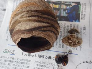 鏡石町で駆除したスズメバチの巣.jpg