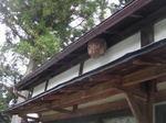 (福島県石川郡、2008年10月上旬).jpg