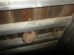 2階軒下のスズメバチの巣の拡大写真(福島県西白河郡、2009年7月下旬).jpg