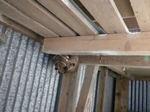 スズメバチが倉庫奥の棚に作った巣の拡大写真(福島県郡山市、2009年7月下旬).jpg