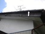 スズメバチが頻繁に出入りする瓦屋根のすき間(福島県田村市、2009年8月上旬).jpg