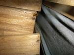 タンスの引き出しを叩いたら出てきたキイロスズメバチ(福島県西白河郡、2009年8月上旬).jpg
