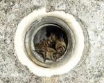 ニホンミツバチは電柱の中(写真拡大).jpg
