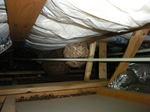 観察窓から2mくらい離れた斜め下の屋根裏天井にスズメバチの巣(福島県田村市、2009年7月下旬).jpg