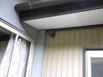 軒下にあるコガタスズメバチの巣(福島県郡山市、2009年7月8日).jpg
