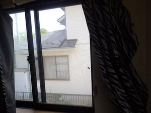 たまたま窓にきたハチを網戸を使って閉じ込めてゲットした様子(福島県三春町).jpg