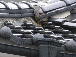 キイロスズメバチが出入りするかわら屋根の隙間(郡山市、2010年10月上旬).jpg