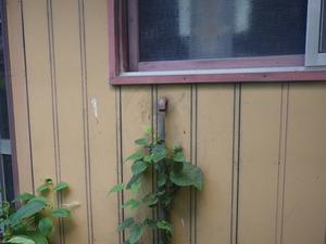 キイロスズメバチが出入りするガス管を通している壁の穴(矢吹町、2013年8月22日).jpg