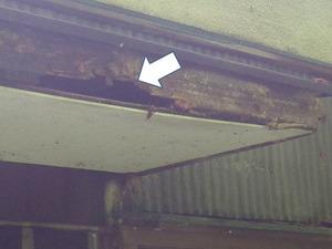 キイロスズメバチが屋根の軒裏に巣を作る(いわき市、2013年7月26日).jpg