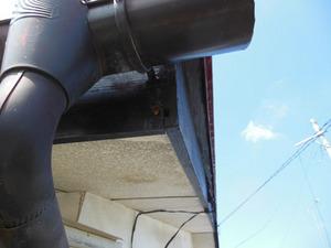 キイロスズメバチが東側屋根の構造的な隙間から出入り 福島、8月初旬