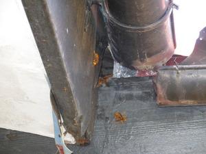 キイロスズメバチが西側屋根の破損した隙間から出入り 福島、8月初旬